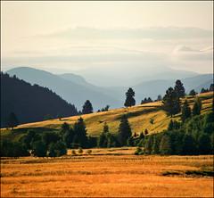 Plaiul Foii (Katarina 2353) Tags: summer mountain film field landscape nikon europe romania romnia plaiulfoii katarinastefanovic katarina2353