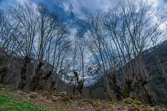 Le creux de la vague (Pierrotg2g) Tags: mountain alps nature montagne alpes landscape nikon tokina paysage 1228 isre d90 dauphin
