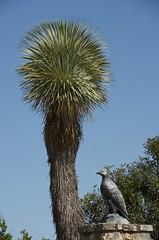 Southern oracles (Pejasar) Tags: oracle texas entrance southern cypressspringsranch ornamentaleagle