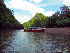 Kilim Geopark (WiLL CWK) Tags: travel nature forest river landscape island photography woods scenery tour scenic mangrove malaysia langkawi kilim kedah mangroveforest geopark