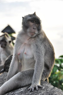 bali nord - indonesie 12