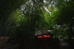 Bamboo & Light (tez-guitar) Tags: wood summer green forest temple kyoto pentax wide sigma bamboo architect pentaxart