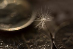 Lost Wish (Captured Heart) Tags: money coins wishes dimes dime wish dandelionseeds