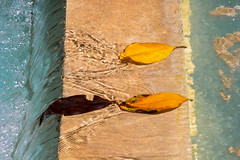 (francescambrosi) Tags: holiday water leaves flow spain espana spagna