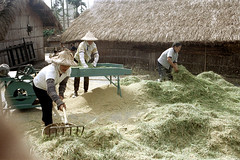 32-161 (ndpa / s. lundeen, archivist) Tags: houses homes winter people woman house color building fall film home rural 35mm buildings workers women village rice nick working taiwan machine rake worker thatchedroof 1970s 1972 hualien 32 taiwanese eastcoast unidentified raking thresher threshing dewolf rurallife thatchroof republicofchina easterncoast easterntaiwan nickdewolf photographbynickdewolf hualiencounty ricethresher threshingrice reel32