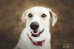 Smile! Life is beautiful! (alessandrafavetto) Tags: dog pet pets color dogs horizontal outdoors dogphotography petphotography dogportrait petphotographer dogphotographer