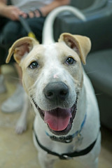Expo_04 (AbbyB.) Tags: dog pet animal newjersey canine doggy shelter shelterpet petphotography easthanovernj mtpleasantanimalshelter