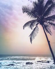 The Sentinel #arabiansea #mextures #ashwembeach #afternoonview #rococcoashwem #hightide (siddharthx) Tags: instagramapp square squareformat iphoneography uploaded:by=instagram secludedbeach june chapora evenings ocean 2016 travel bestbeachesingoa borntobewild vacation ashwem glorioussunsets view goa shotoniphone forts amazing india northgoa beautiful freedom panoramic landscape arabiansea landscapes seascape panorama rococcoashwem magnificent monsoons aguada bornfree ashwemgoa shotwithaniphone
