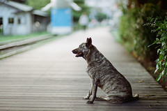 (ozzy5836) Tags: dog film 35mm canon ae1 85mm 200 kodacolor f12