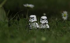 Hunting (LegoLee) Tags: grass starwars lego stormtroopers helmet humor humour bradbury blaster endor ewoks
