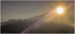 Where are you ?   (www.nathalie-chatelain-images.ch) Tags: sunset sky sun mountains birds soleil nikon ciel rays coucherdesoleil oiseaux rayons montagnes