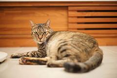 DSC09342S (lazybonessss) Tags: leica cat kitten nana summicronm50 sonya7 sonyilce7