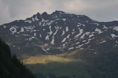 DSC_4906 (d90-fan) Tags: animals outdoors austria tiere sterreich natur schnecke rauris fohlen hohetauern tauern krumltal murmeltiere raurisertal