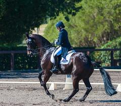 160703_YR_Champs_5216.jpg (FranzVenhaus) Tags: horses performance sydney australia competition event nsw athletes aus equestrian riders dressage siec