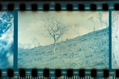 Observations (joshsmith1231) Tags: camera wood old uk blue light wild summer sun white black tree green film nature field grass leaves proud wales forest canon vintage happy fire photography hope 50mm branch open flat bright hill great free sharp negative hedge gradient gloom hay straight development slant basic britian developing caffenol