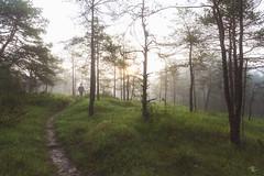 20160521 - Aube dans la brume (AneBarre) Tags: de soleil arbres chemin fort brume lever aube