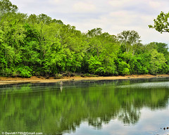 Shepherd of the Hills Fish Hatchery (David Davila Photography) Tags: vacation tree water outdoor mo missouri wife branson geotag 2016 tablerocklake nikond800 holuxm241 shepherdofthehillsfishhatchery