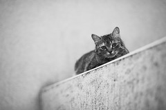 181/366 (romainjacques17) Tags: bw france animal cat canon blackwhite chat bokeh streetphotography nb 365 larochelle 135mm 6d picoftheday project365 ef135mm 365project