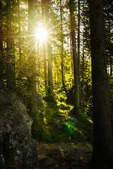 Sunstar at the Fairytale Forest (xxremixx) Tags: morning tree forest germany bayern deutschland bavaria berchtesgaden mood magic wald bume morgen baum enchanted ramsau fairytail zauberwald