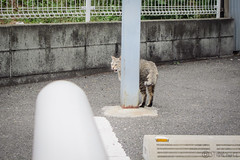 Today's Cat@2013-05-11 (masatsu) Tags: cat canon catspotting thebiggestgroupwithonlycats powershots95