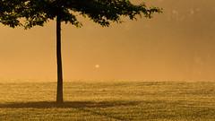 Morning fog (David G Ruth) Tags: park morning st nikon ky louisville seneca matthews d3200