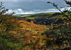 Deep Combe beauty (Dazzygidds) Tags: autumn colours perspective diversity somerset textures framing depth sunlightandshadow exmoor westsomerset exmoornationalpark combes exevalley britishnationalpark roadhill riverexevalley roomhill currcleave