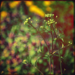 i need a hero (sommerpfuetze) Tags: color texture nature square spring heart bokeh natur grasses herz frhling einestages bodenmrchen