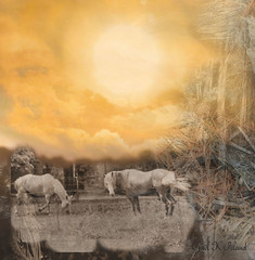 Horses in a new day (gailpiland) Tags: sky horses sun texture photoshop landscape hypothetical autofocus thegalaxy flickraward theperfectphotographer sharingart gailpiland ringexcellence flickrstruereflection1