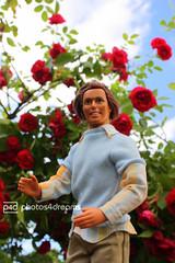 hi, i'm ken (photos4dreams) Tags: roses rose vintage toy ken barbie prince rosen charming spielzeug photos4dreams photos4dreamz p4d