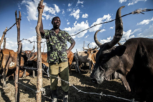 Farmer on flood plain, Mongu, Western Zambia, Photo by Felix Clay/Duckrabbit, 2012.
