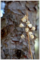 Seca (Rey Romero) Tags: plantas 365dias