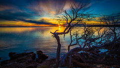 Sunset Coffin Bay, South Australia (Jacqui Barker Photography) Tags: trees sunset clouds australia southaustralia treeroots gnarlytree coffinbay coastalplants