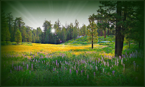 Mountain Meadow Morning
