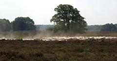 Sheep @ Ermelose Heide (karstensfotos) Tags: archaeology bronze sheep heather age heath burial moor mounds heide neolithic barrows pentaxk10d heideveld