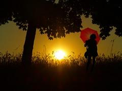 sundawn before cornfield with lady and red umbrella (hans 1960) Tags: sunset red summer woman sun tree girl silhouette lady umbrella sunrise cornfield sommer natur gras summertime sonne sonnenaufgang baum kornfeld schirm sundawn sommertrume mygearandme flickrstruereflection1