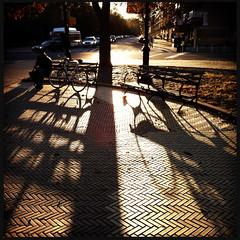 bench and bike (grapfapan) Tags: nyc autumn trees usa sun bicycle brooklyn shadows iphone hipstamatic