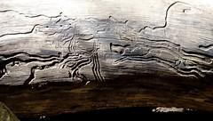Obstculos Interessantes (Rctk caRIOca) Tags: rio de do janeiro pedra elefante itaipuau
