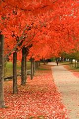 Red Ahorn all street long. (Chris_Nissen) Tags: red canada vancouver rod blatt sonne baum kanada ahorn