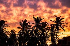 SUNSET BARRA NOVA (CUMBUGO) Tags: light sunset sky color tree clouds nikon atmosphere palm nikkor f28 d800 70200mm d800e vision:sunset=0574 vision:outdoor=0569 vision:sky=0876 vision:clouds=0671