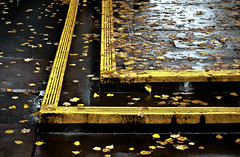 Yellow Leaves Behind the Yellow Line Please (Orbmiser) Tags: autumn fall leaves rain yellow oregon portland leaf nikon sidewalk raindrops showers d90 55200vr