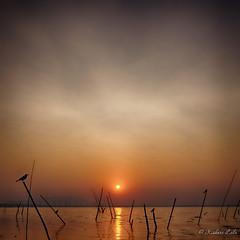 Resting Place (kishorelala) Tags: bridge sunset red sea sky orange sun india bird water peace gray smooth peaceful calm shore stick serene crow mumbai vashi navimumbai