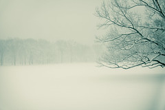 (dan_nyc) Tags: park nyc winter manhattan central snowfall nikkor50mmf12