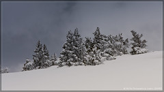(Dcl'ike) Tags: france nature montagne neige provence paysage 169 raquette vaucluse sauvage montventoux balades