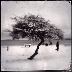 winter wonderland, at the beach. (katehailey) Tags: tree beach mobile photography kate hailey beachlife only alki westseattle alkibeach 365 day40 iphone 2014 365project iphoneography hipstamatic instagram ifttt iphone4s iphone5s 365infocus