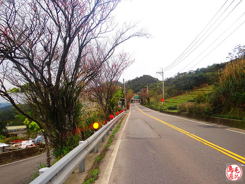 雲海山步道 (35).jpg