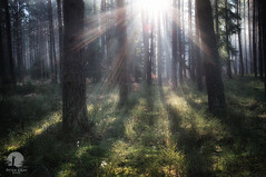 Coming (warmianaturalnie) Tags: morning trees sun nature forest sunrise landscape spring poland sunrays warmia