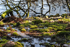 (MegsPhotosUK) Tags: life uk trees lake tree green nature wet water 50mm moss rocks sink devon marsh dartmoor liquid mothernature marshland dense burratorreservoir