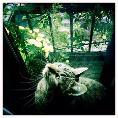 plant flower green apple window cat hipstamatic iphone5s... (Photo: SOVA5 on Flickr)