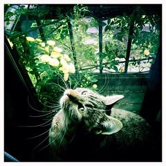 plant flower green apple window cat hipstamatic iphone5s... (Photo: SOVA5 on Flickr)
