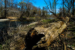 Log by the river (Plump Panda Photography) Tags: nature water canon river log naperville 18135mm